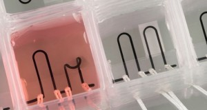 3D-Printed_Organs-on-chip_Help_Humans_Create_Effective_Medicine_See_Deseases_Work