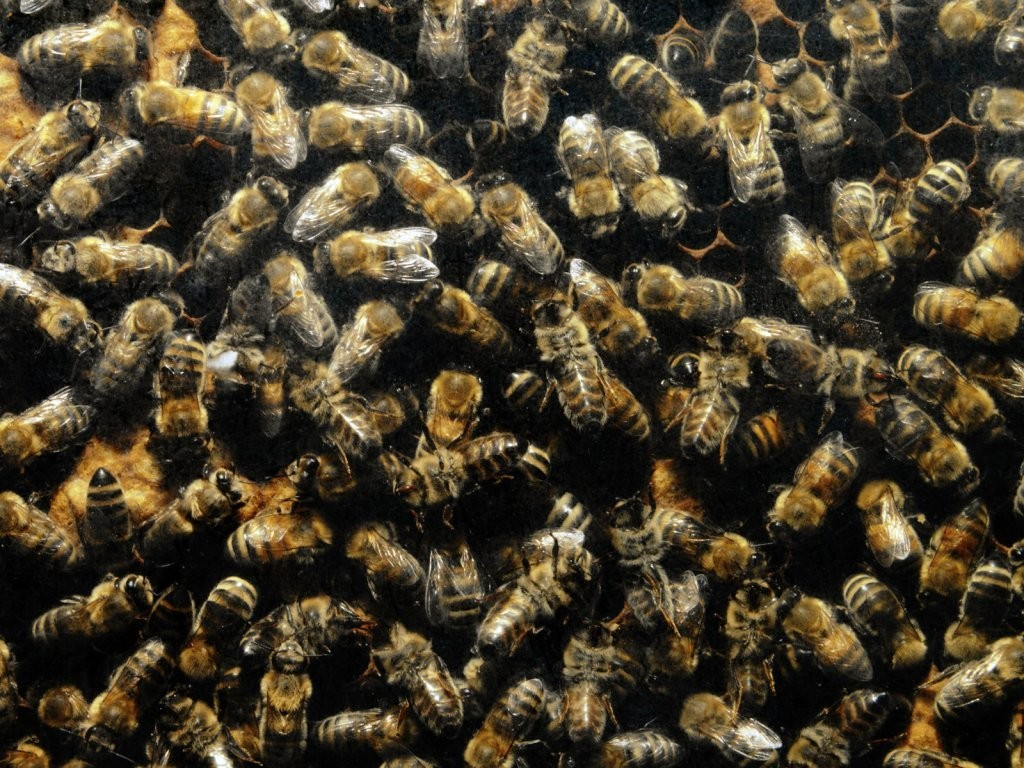 Decision-making_on_the_principle_of_a_bee_swarm_will_make_people's_lives_better?