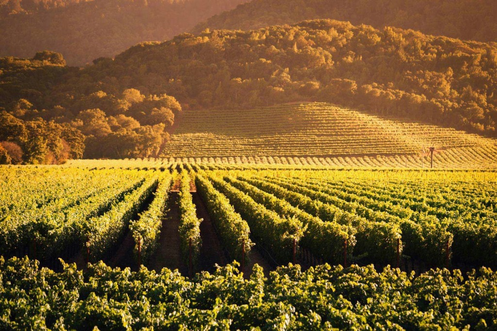 The_profitability_of_wine_production_in_South_Africa_fell_to_1%