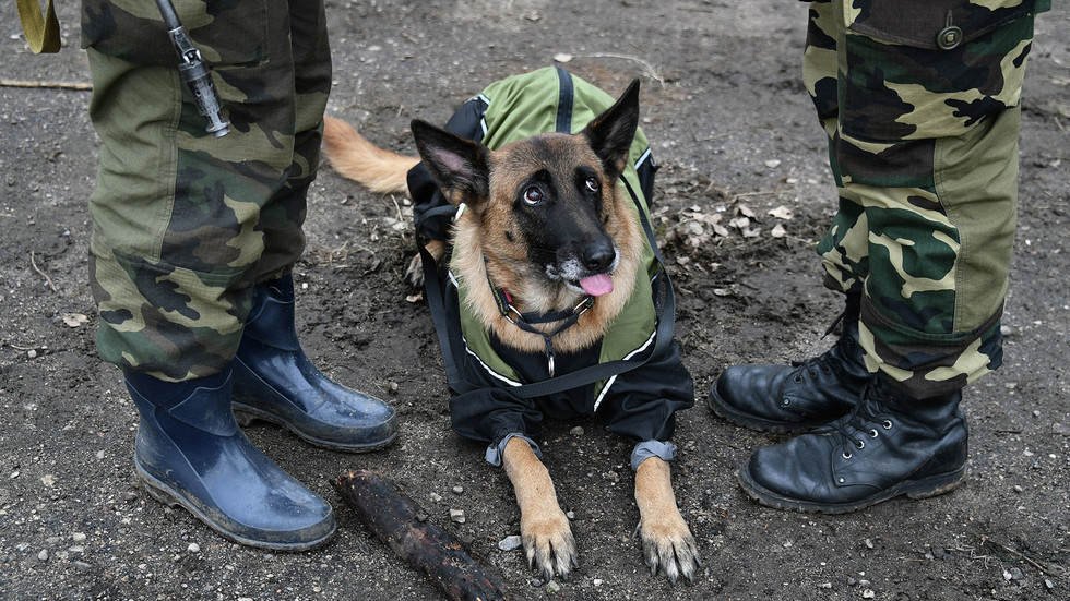 In_the_St._Petersburg_interior_Ministry_is_an_internal_check_because_dog_training_center