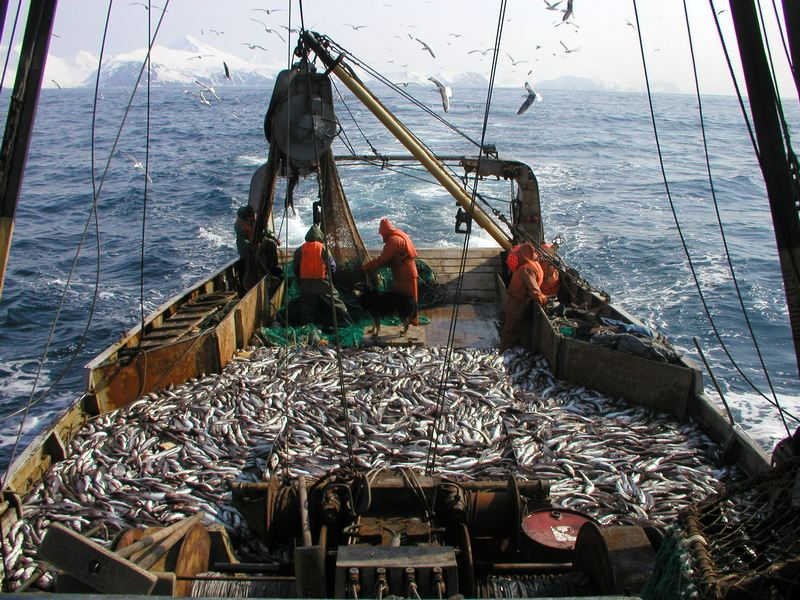 The_company_on_Pollock_catch_on_Sakhalin_sold_for_half_a_billion_dollars