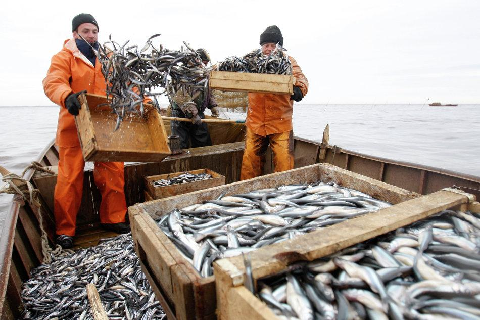 The_Ministry_of_agriculture_criticized_the_idea_to_put_quotas_on_fishing_auctions